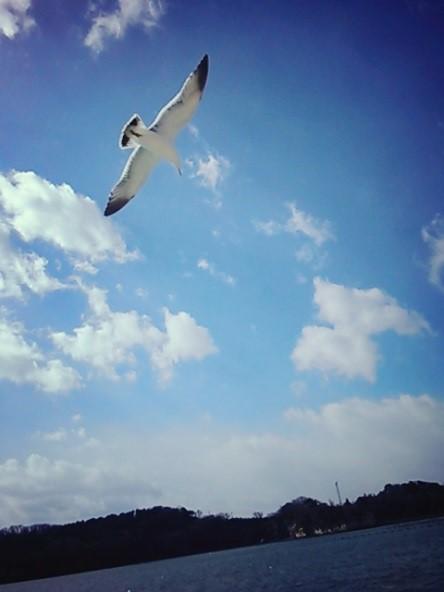 gaga_nonojima3.jpg